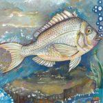 An illustration of a scup fish by Léa Tirmont-Desoyen