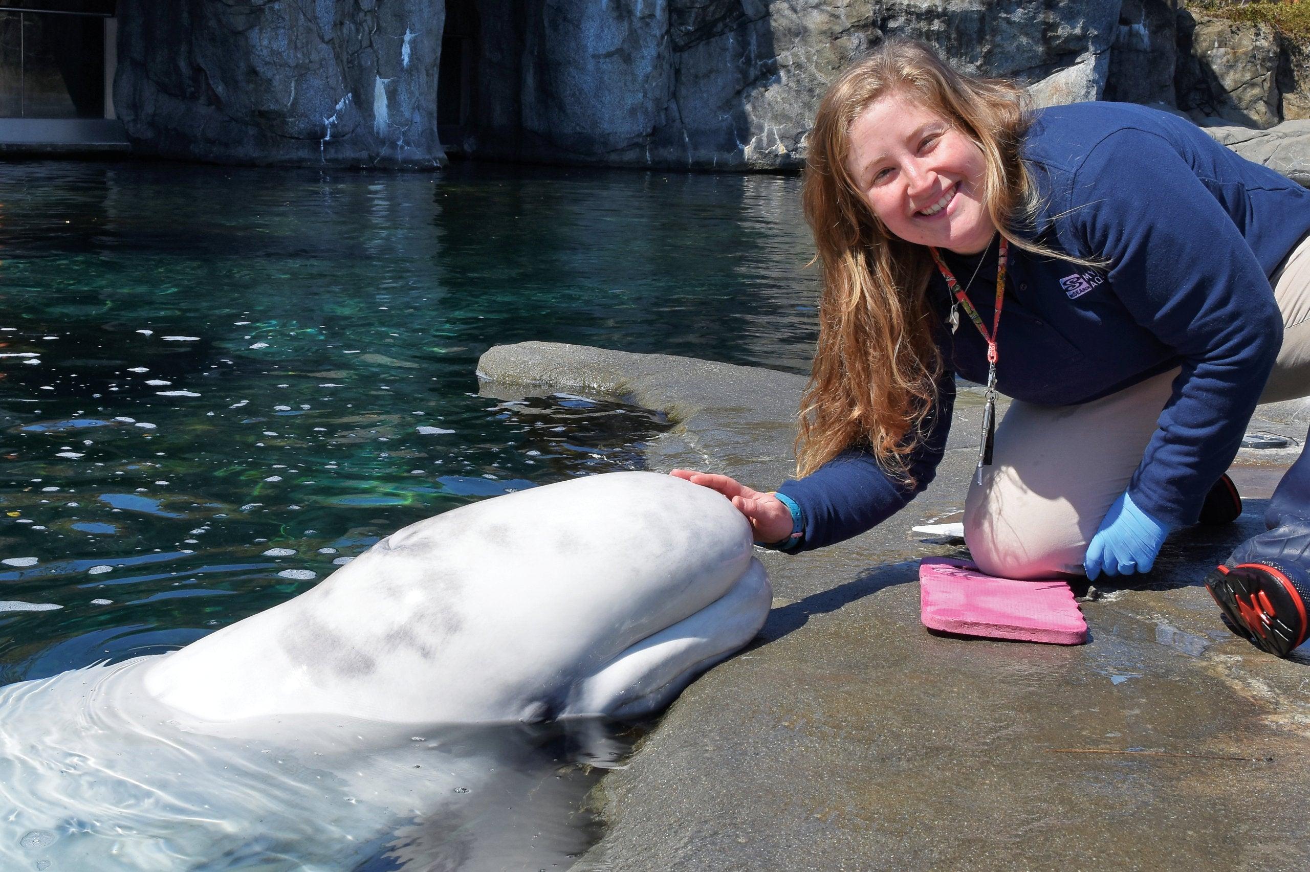 Allie (Seifert) Bruscato working with a white beluga whale at Mystic Aquarium