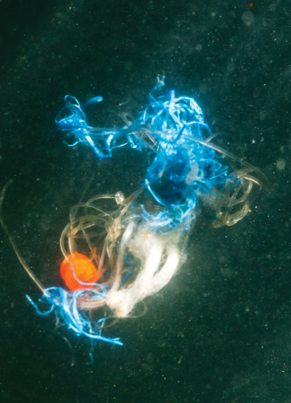 Close-up of a piece of fishing line tangled with other pieces of plastic debris floating below the surface