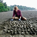 Callie Veelenturf on the beach working on leatherback nest excavation in Equatorial Guinea