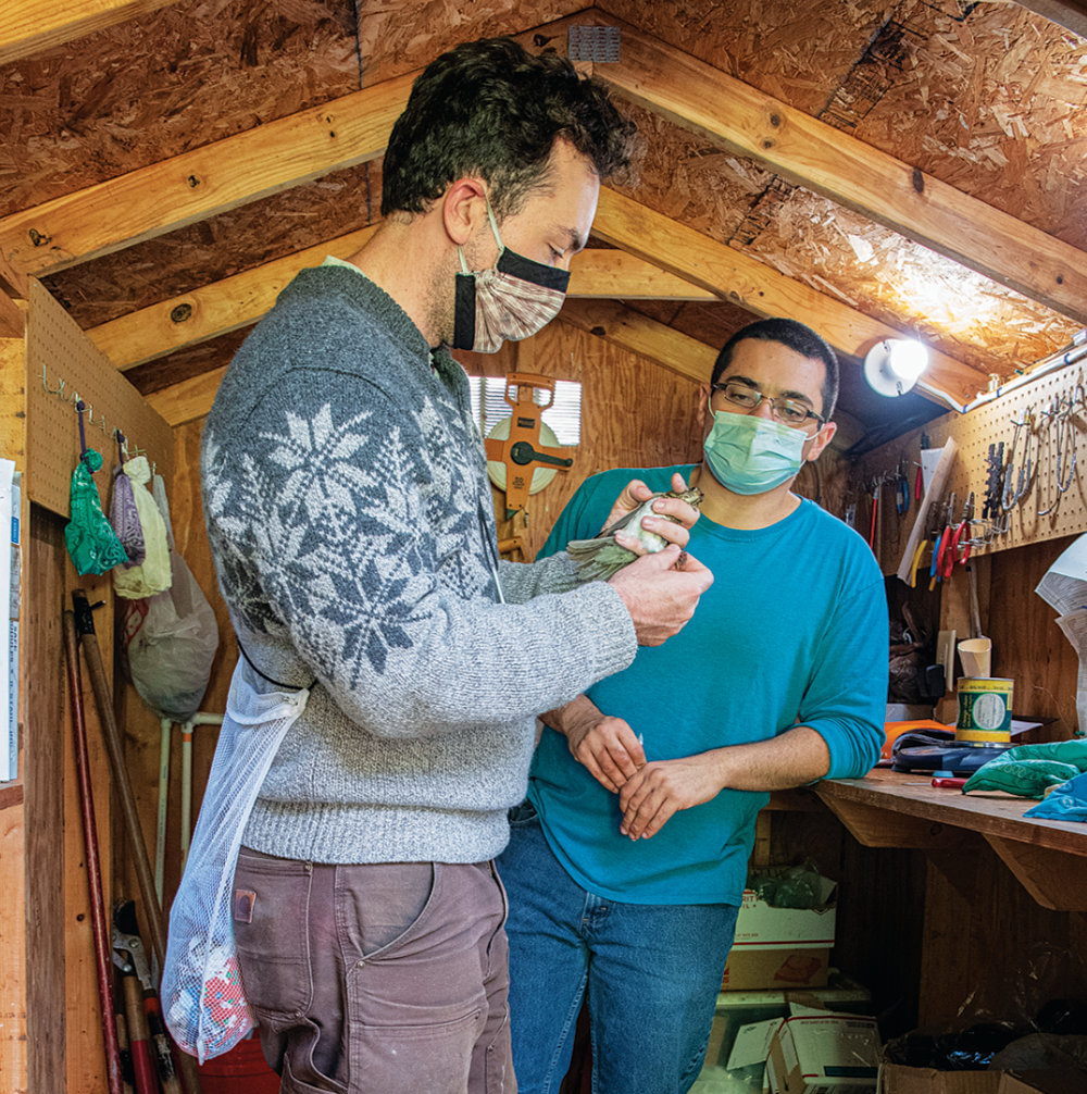 Clay Graham, M.S. '20 inside a wooden shed with a colleague preparing to place a metal band around the leg of a gray-cheeked thrush he holds