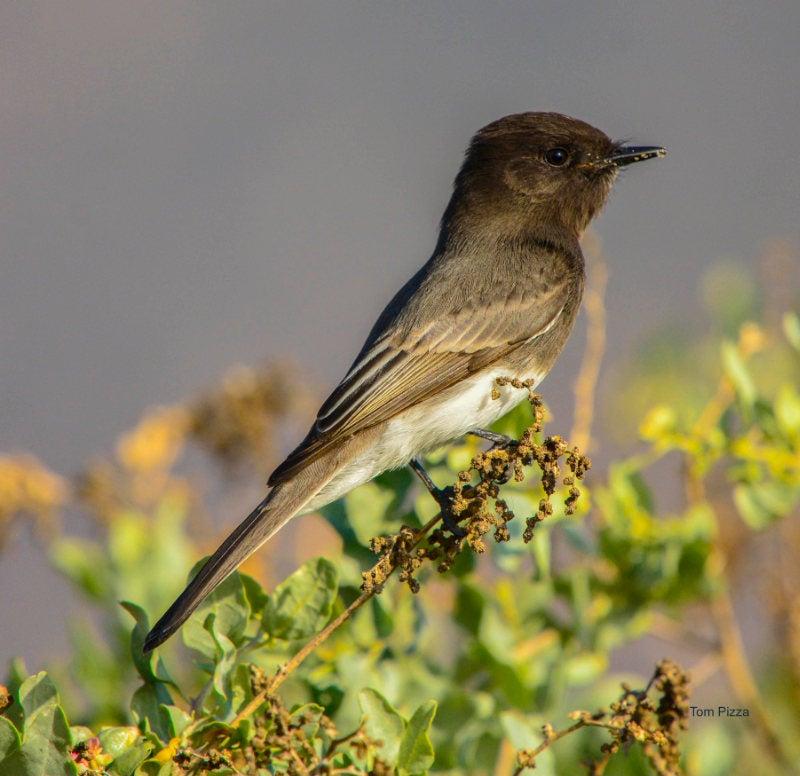 A bird perched on a sprig of a budding bush