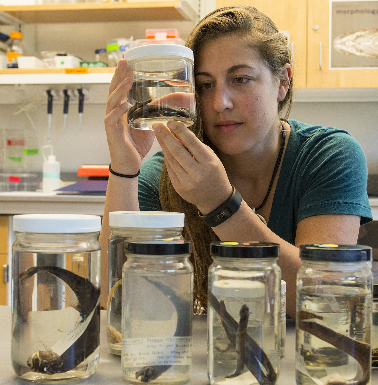 Marranzino examines dragonfish specimens in jars as part of her research on their lateral line sensory system. Photo by Nora Lewis.