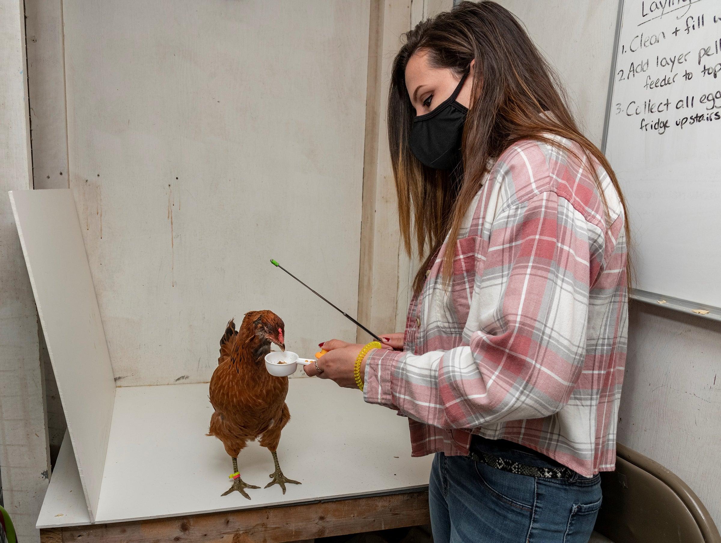 Weidemann trains her chicken