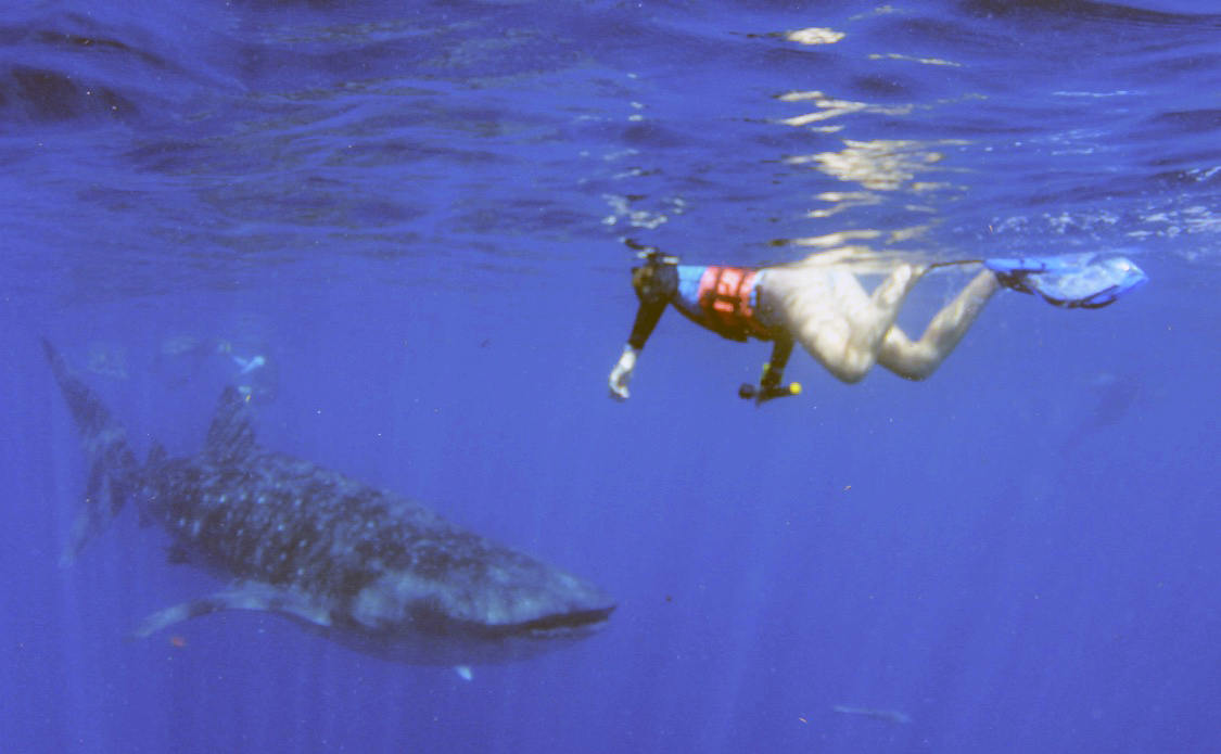 Bethany DeLoof swims with a whale shark