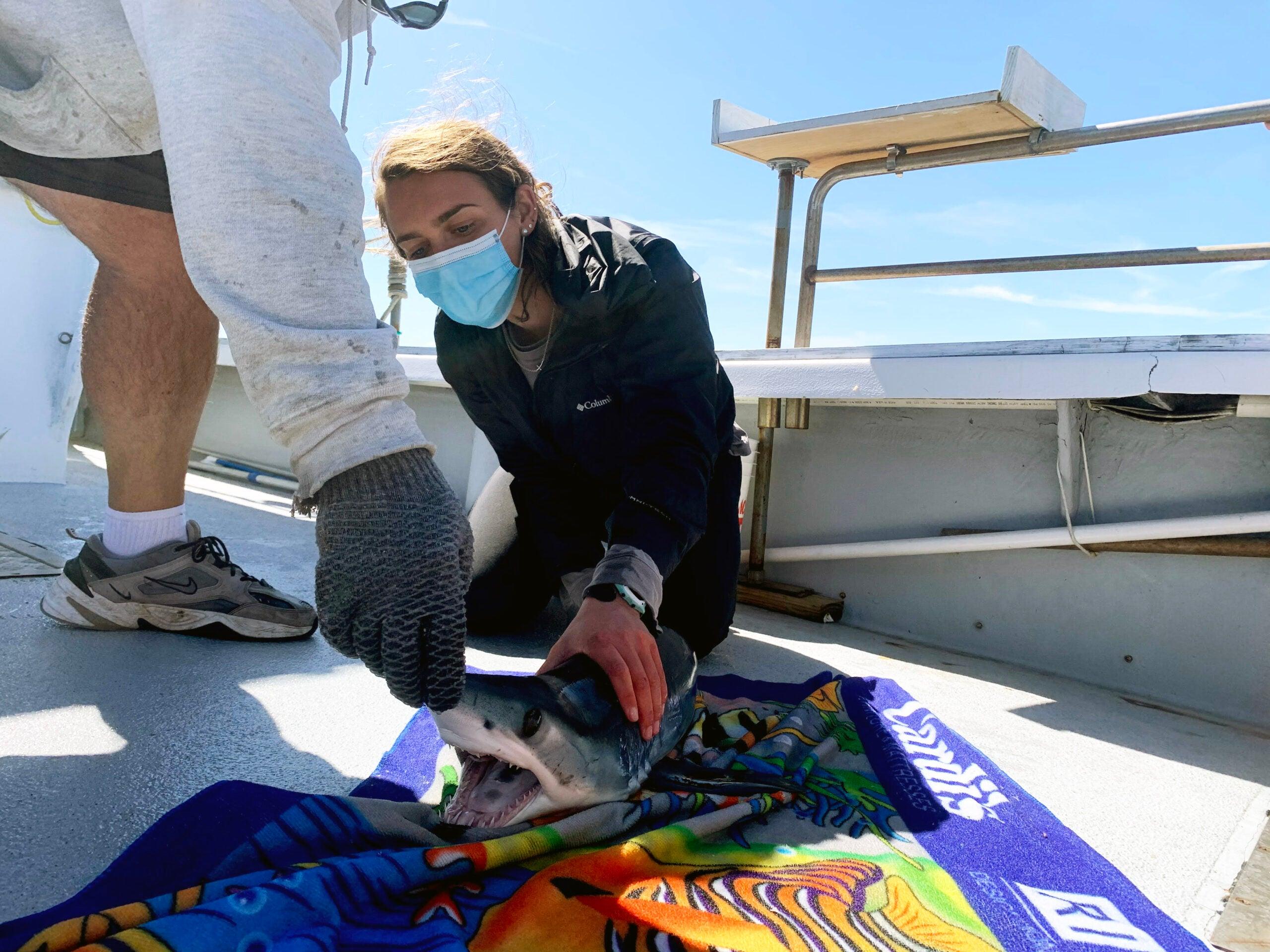Maria Manz handles a mako shark