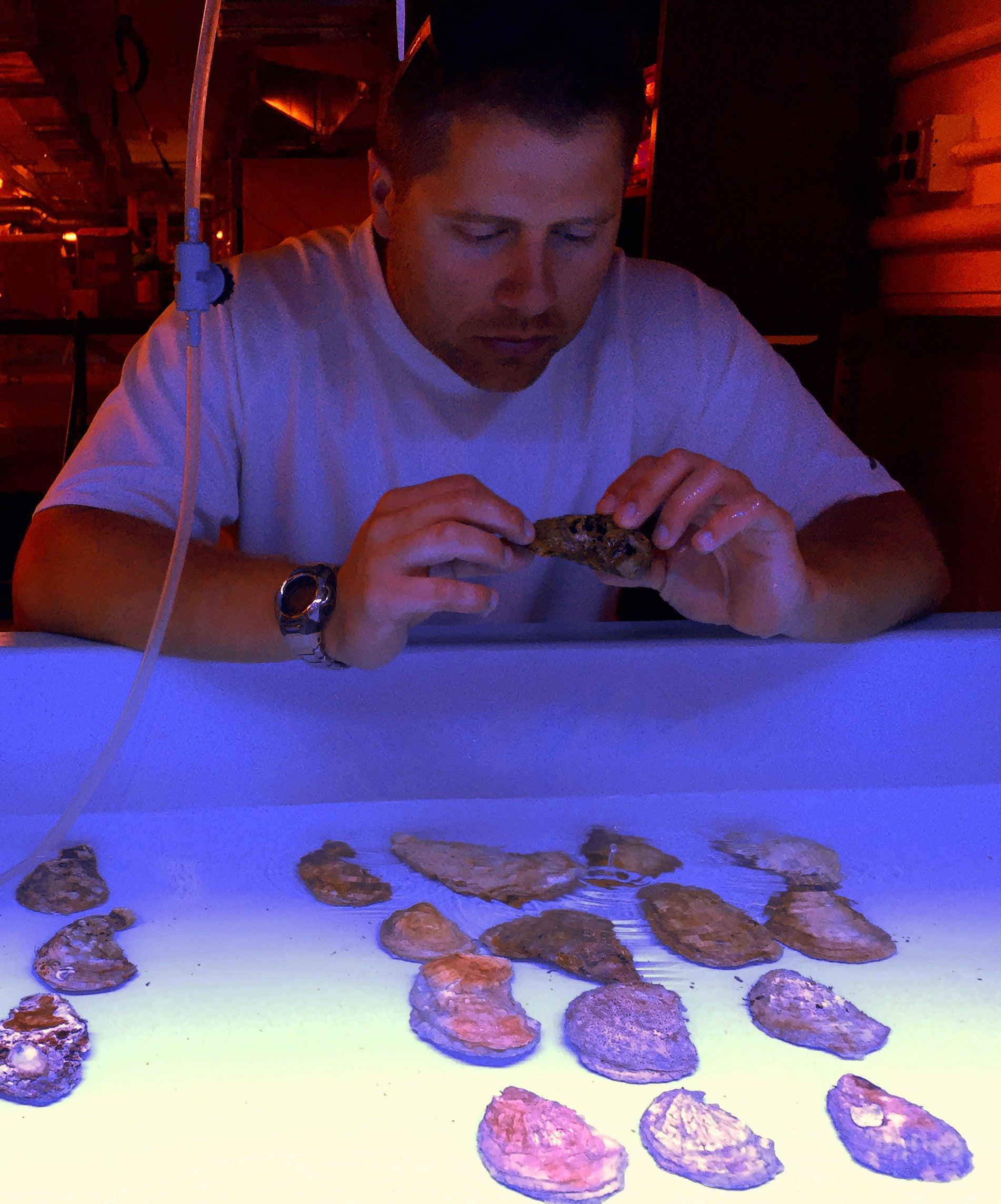 Jonathan Puritz examines oysters