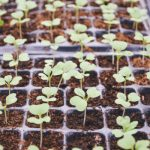 A close up of seedlings in a green house Photo by CHU TAI on Unsplash