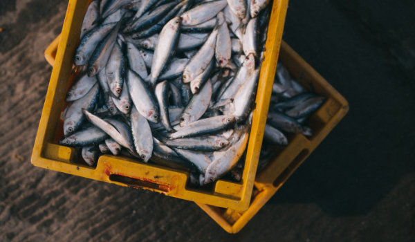 Aquaculture and Fisheries Technology