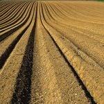 Furrows of tilled soil. Photo by Zbysiu Rodak on Unsplash