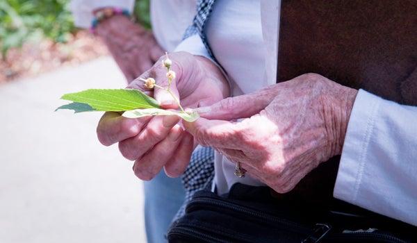 older adult holding a leaf