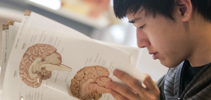Male student studying the human brain