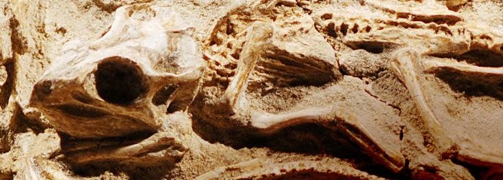 Dinosaur Fossils
