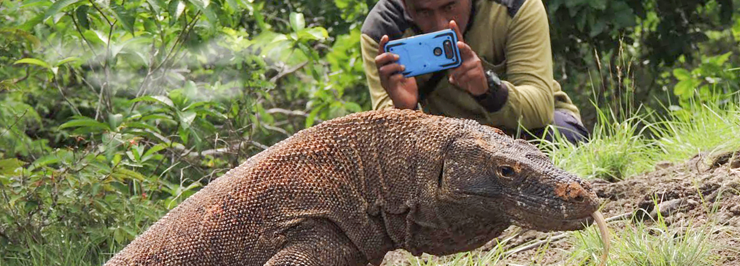J Term student photographing a Komodo dragon in Indonesia