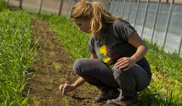 A student working in a greenhouse to illustrate land stewardship and agriculture expertise at the Cooperative extension