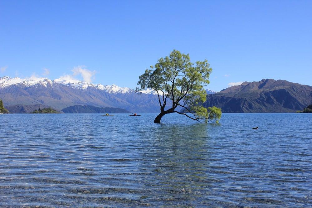 the lone tree of Lake Wanaka New Zealand