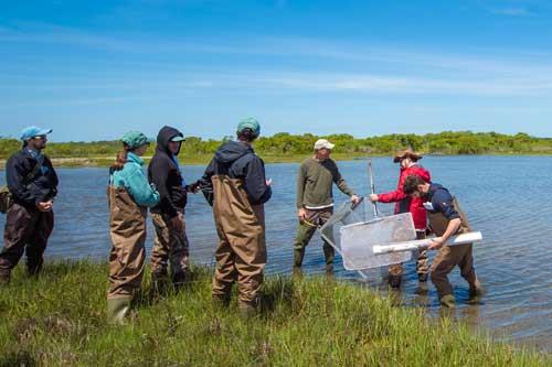 Metcalf Institute fellows throw a trap to catch fauna in the coastal wetlands