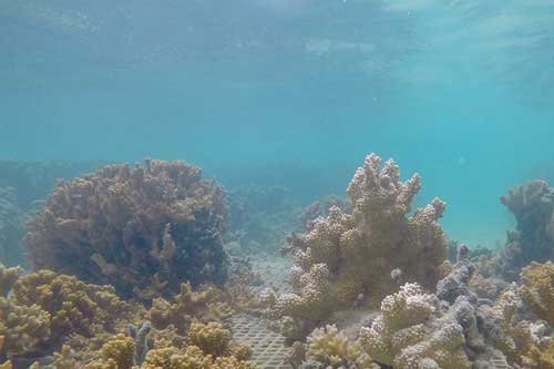 coral research nets in Kaneohe Bay Hawairr
