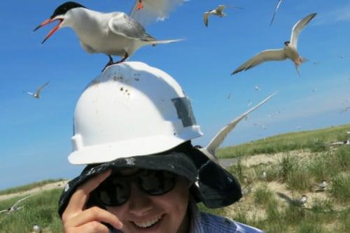 Coastal Fellow, Mary Grande, studies sea birds.
