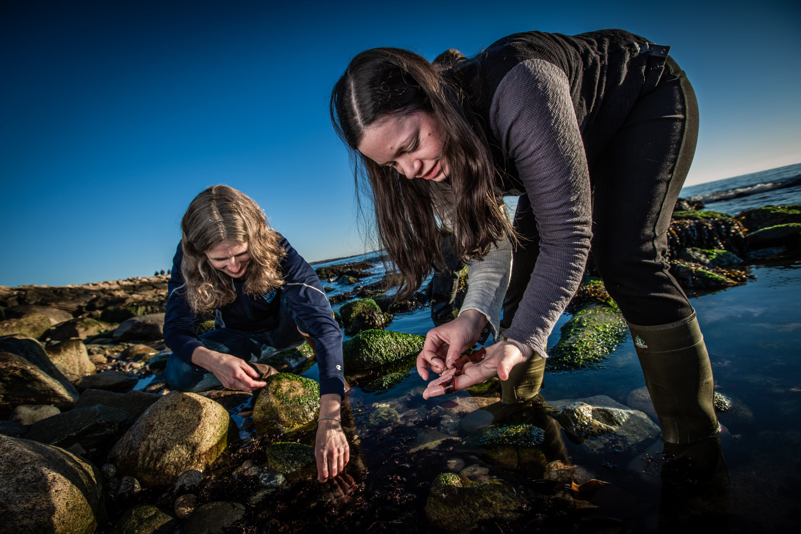 Carol Thornber and Lindsay Green-Gavrielidis search for marine invasive species in the intertidal zone.