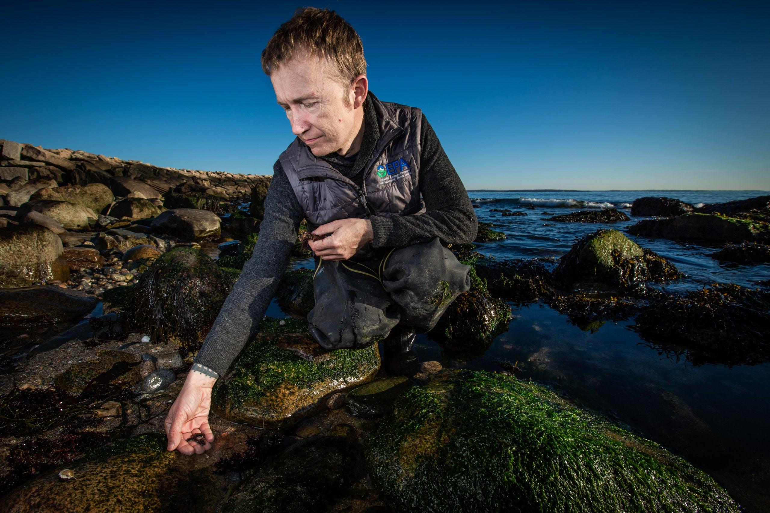 Niels Hobbs holds several Asian shore crabs along the shoreline