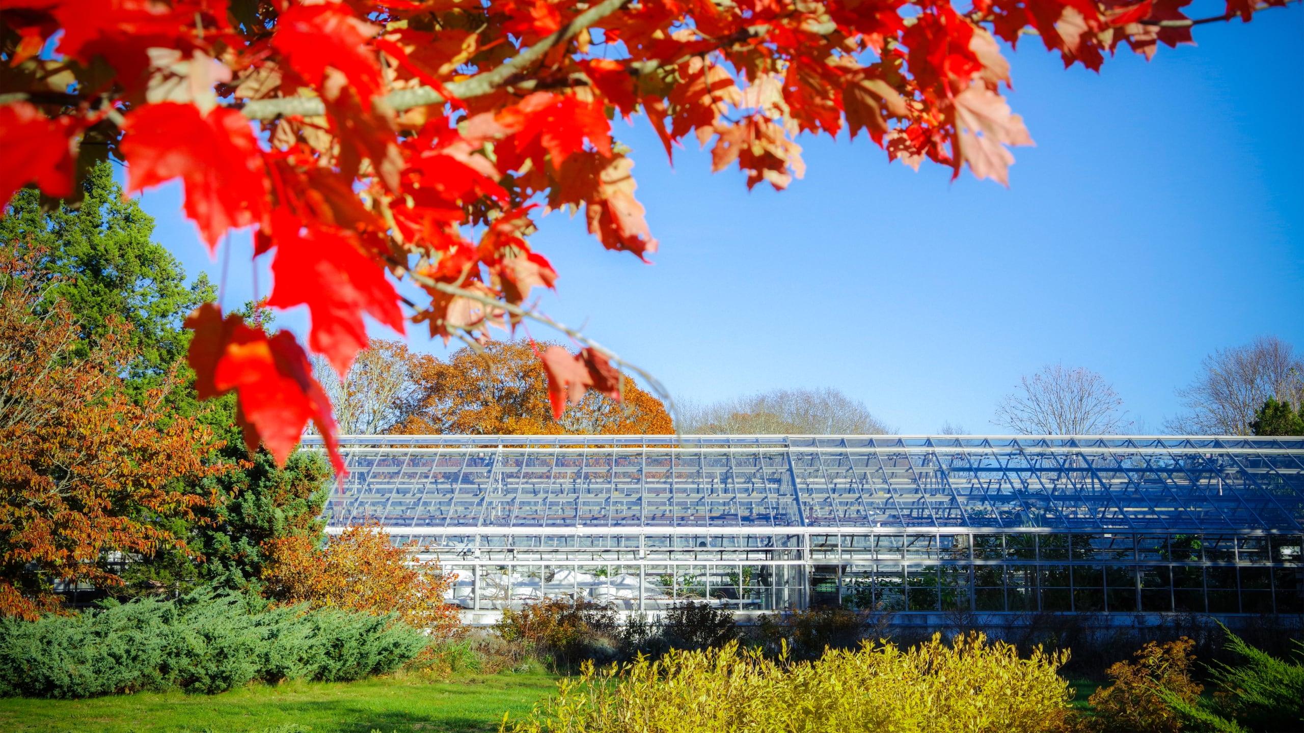 URI greenhouses in autumn