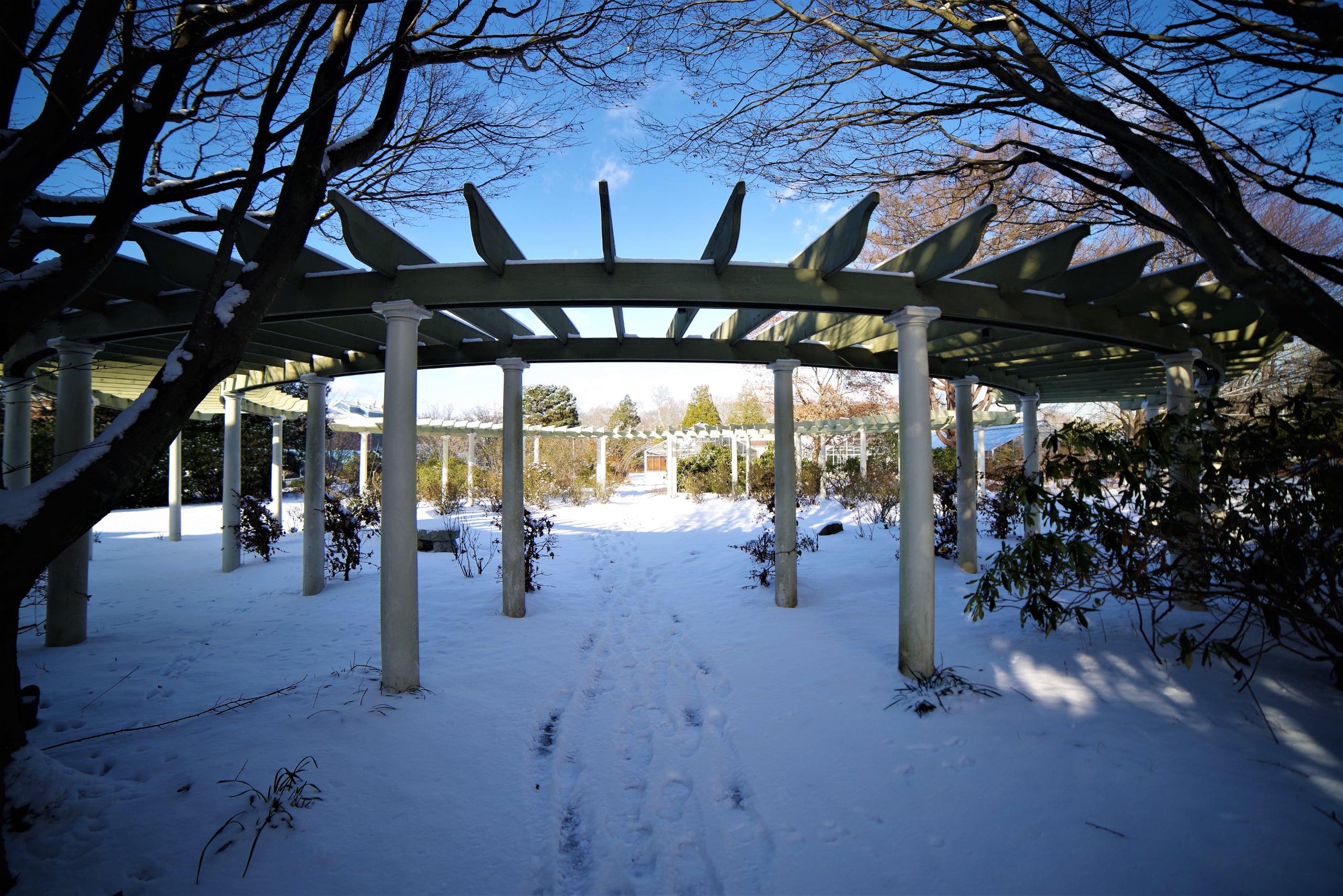 gardens under a blanket of snow