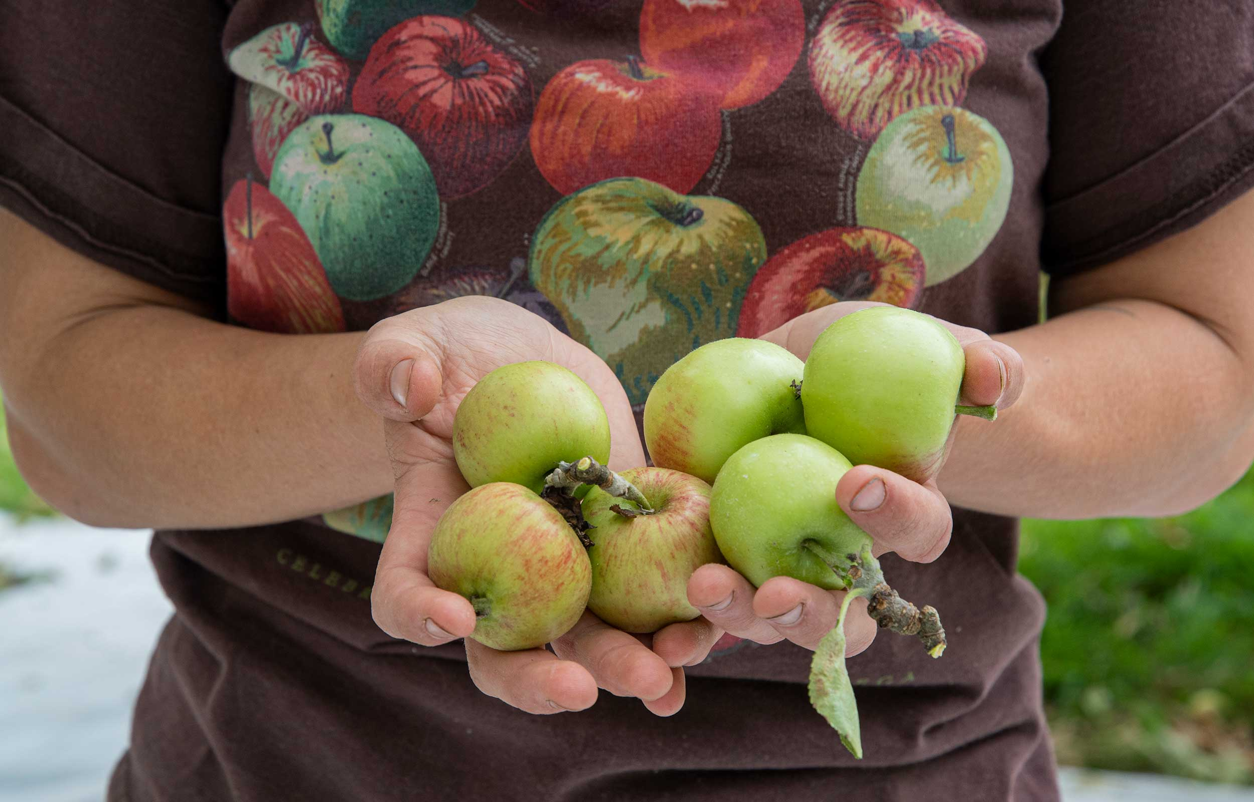 woman holding apples in her hands after apple picking
