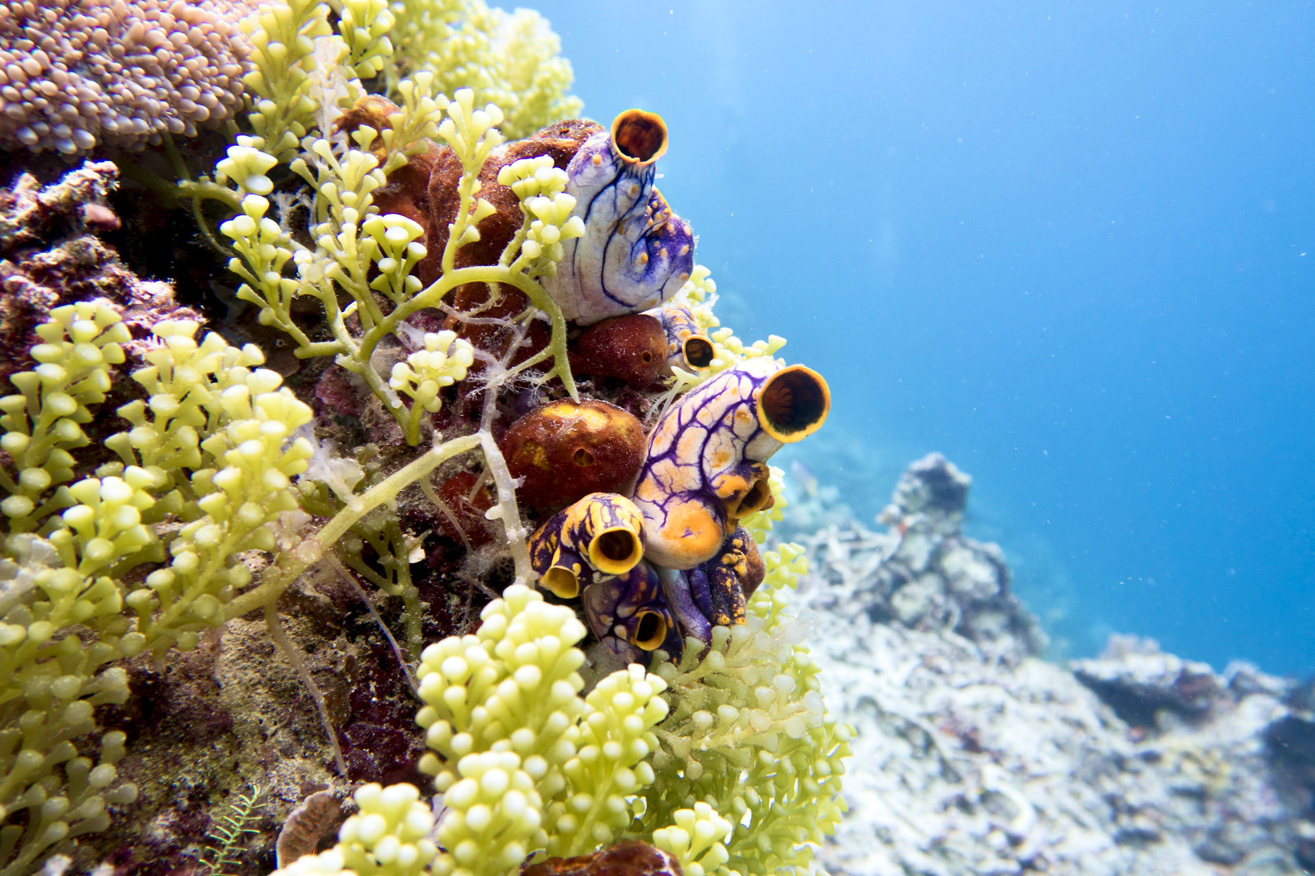 colorful coral reef in Indonesia