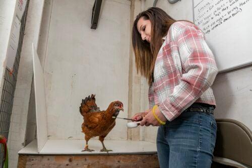 Jessica Weidemann trains a chicken